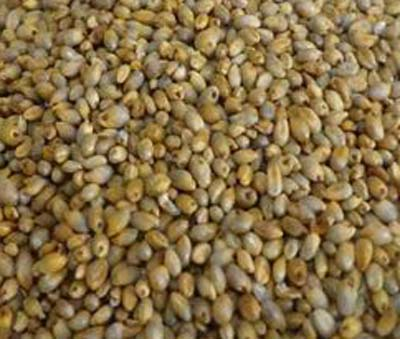 BAJRA WHOLE 500G
